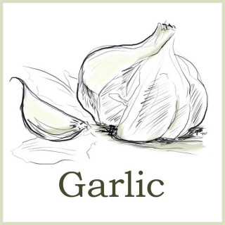 about-garlic
