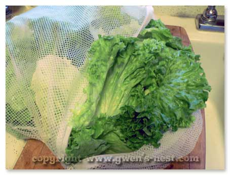 washing-lettuce (14)