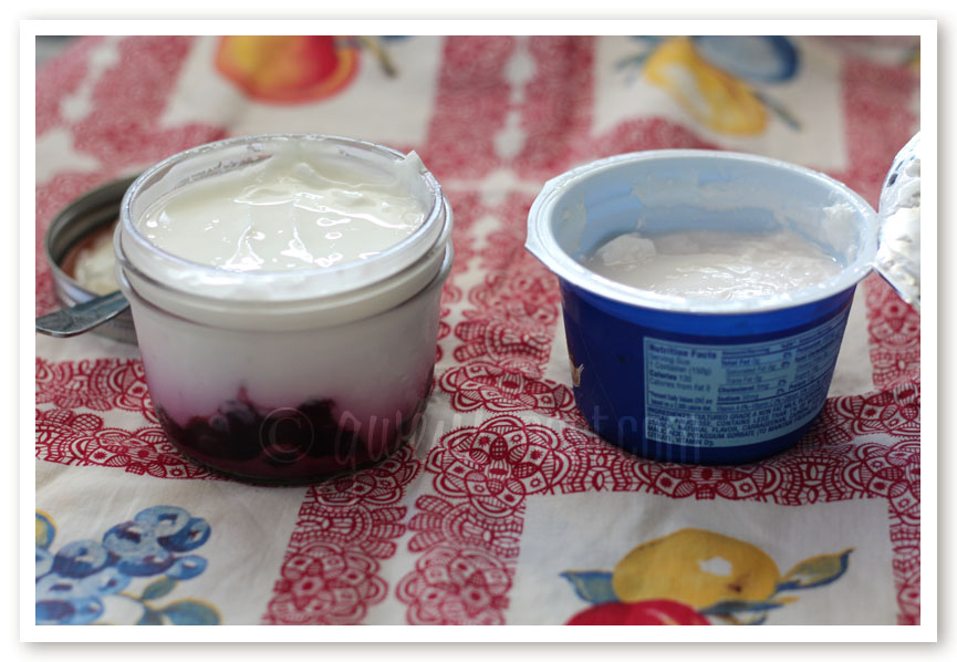 THM yogurt recipe gwens nest