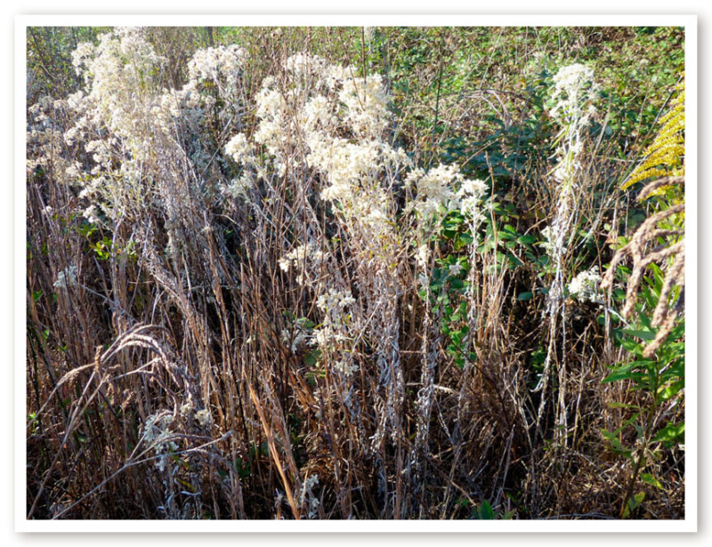 herbal remedies for nasal congestion (1 of 62)