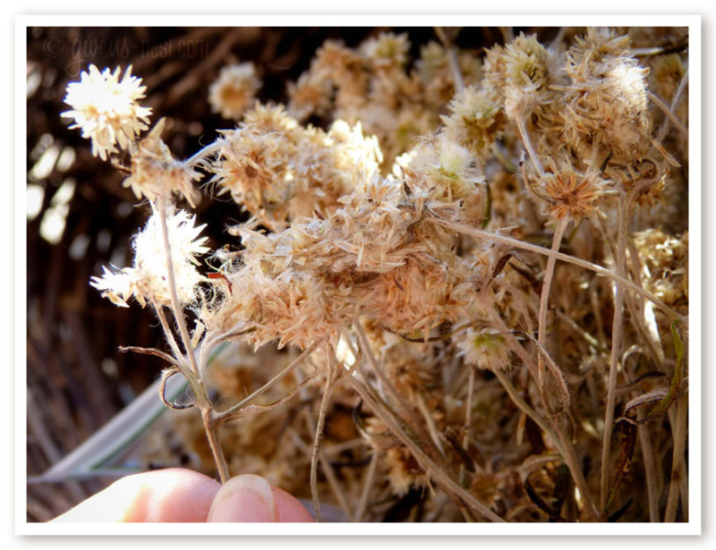 herbal remedies for nasal congestion (11 of 62)