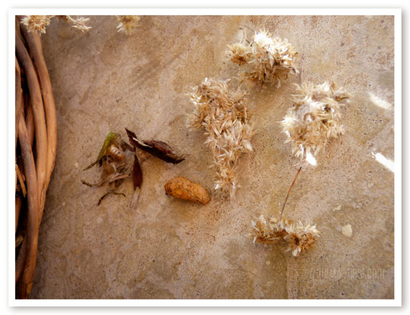 herbal remedies for nasal congestion (12 of 62)