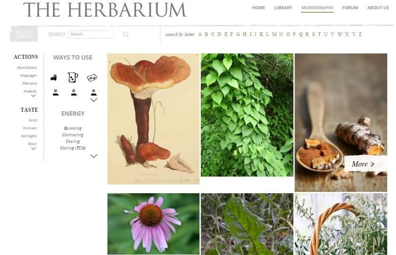 herbarium monographs