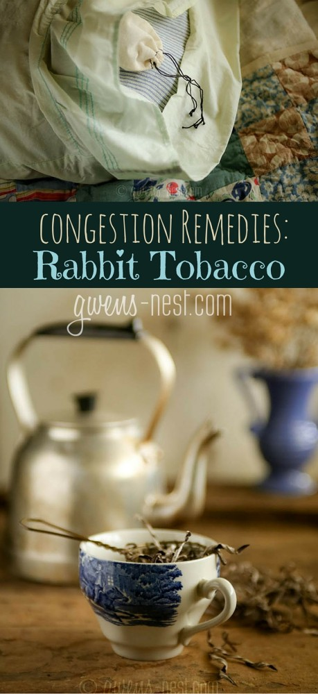 Sinus congestion remedies-I'll show you my favorite ways to make and use rabbit tobacco herb for congestion.