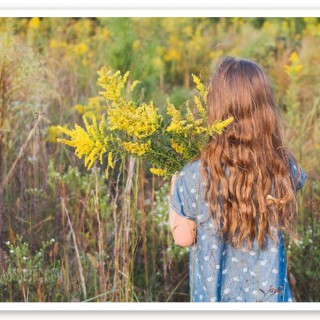 goldenrod herb (31 of 46)