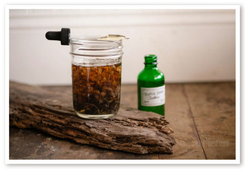 I'll show you how to make a tincture using rabbit tobacco- a fantastic antiviral herb!