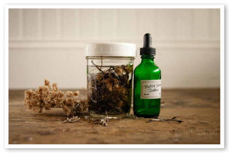 Rabbit Tobacco Tincture