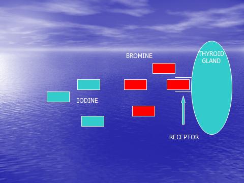 Bromine Iodine Receptors