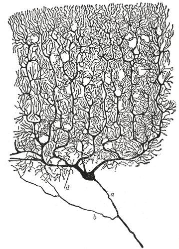 a single neuron